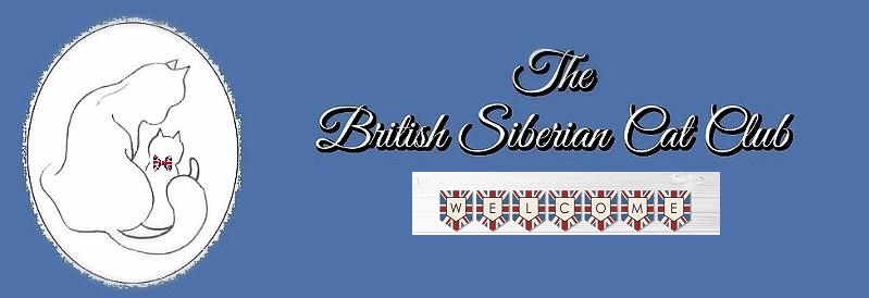 A New British Siberian Cat Club.