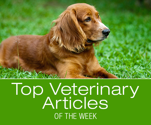 Top Veterinary Articles of the Week: Summer Safety, Heat Stroke, and more ...