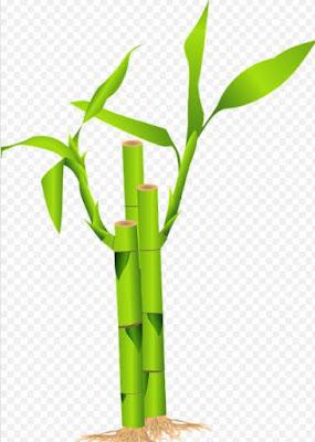 Gambar Pohon Bambu Kartun Tebu Bamboo