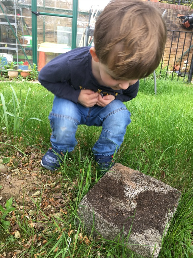 Our-weekly-journal-shopping-and-ants-toddler-looking-at-ants-on-a-brick-in-a-garden