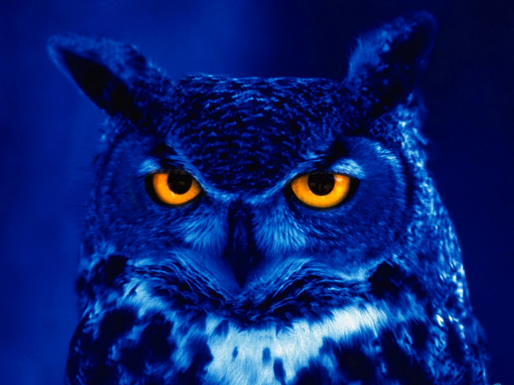 photo night-owl_zpsoesbeyha.jpg