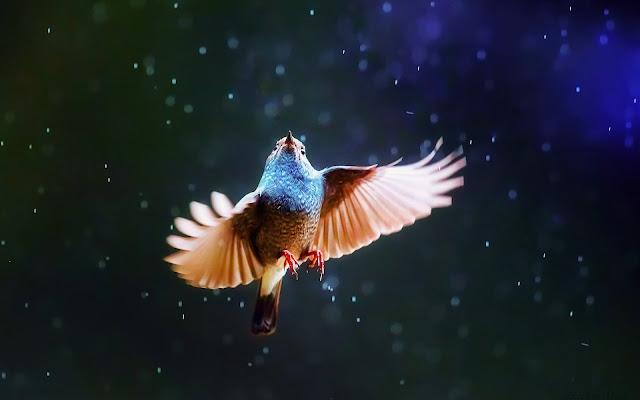 Download free beautiful animal wallpapers hd widescreen high quality desktop!