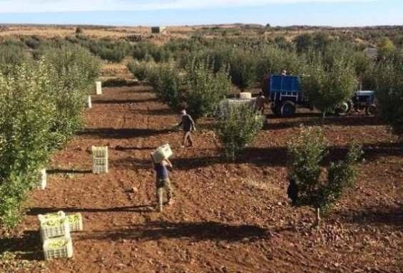 زراعة السويداء تبدأ منح شهادات منشأ لنقل الصادرات الزراعية براً
