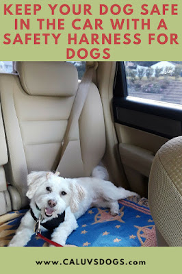 Car Safety Harness For Dogs.  Keep dogs safe in the car with a travel safety harness for dogs.  Dogs, Pets, Pet safety, Dogs travel safely