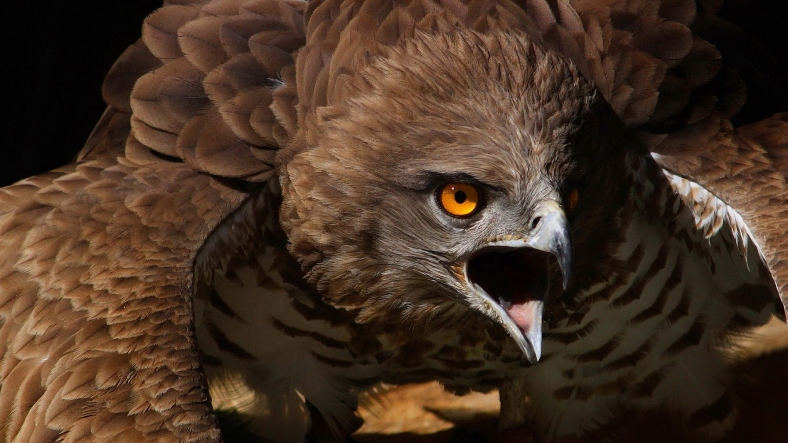 Scary Animal Wallpapers