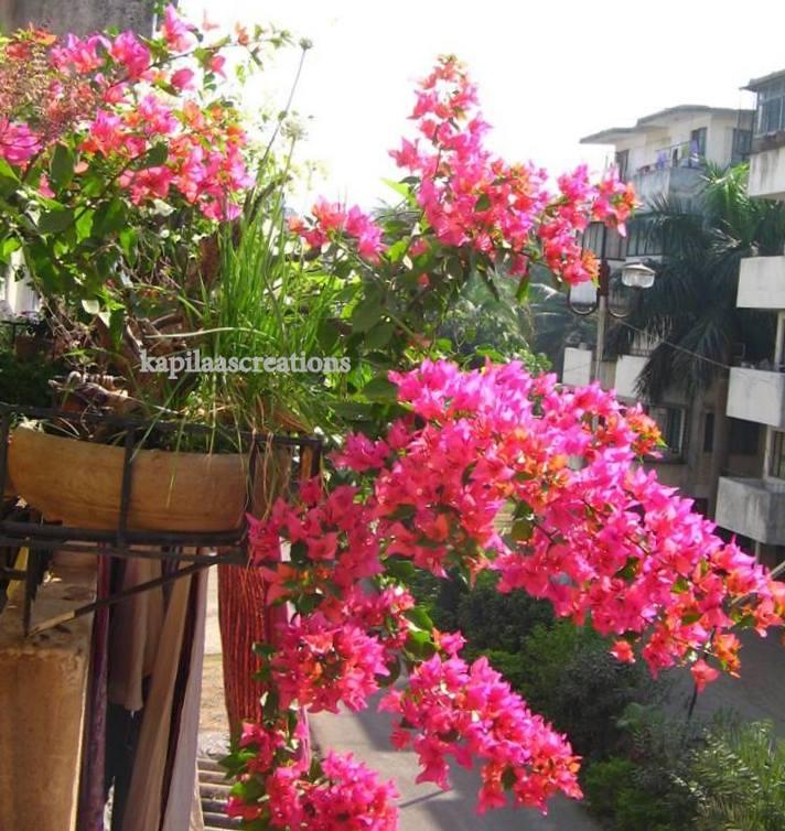 Bonsai Kapilaas How To Fertilize A Bonsai Plant