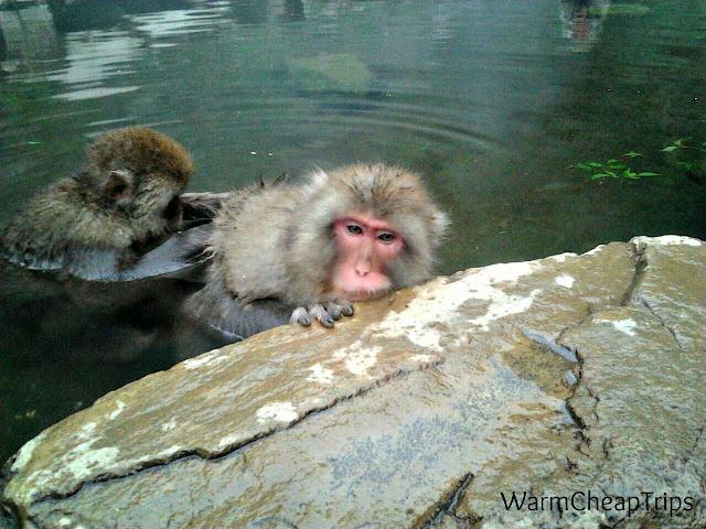Discover Japan: lo Snow Monkey Park