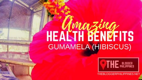 Eco Benefit of Hibiscus Tea