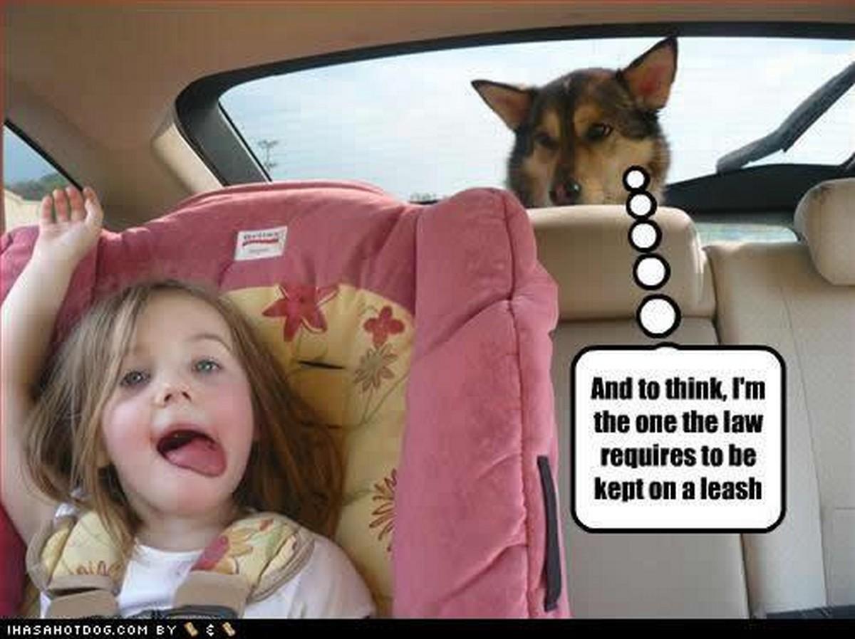 Chuck's Fun Page 2: Dog fun - 20 images