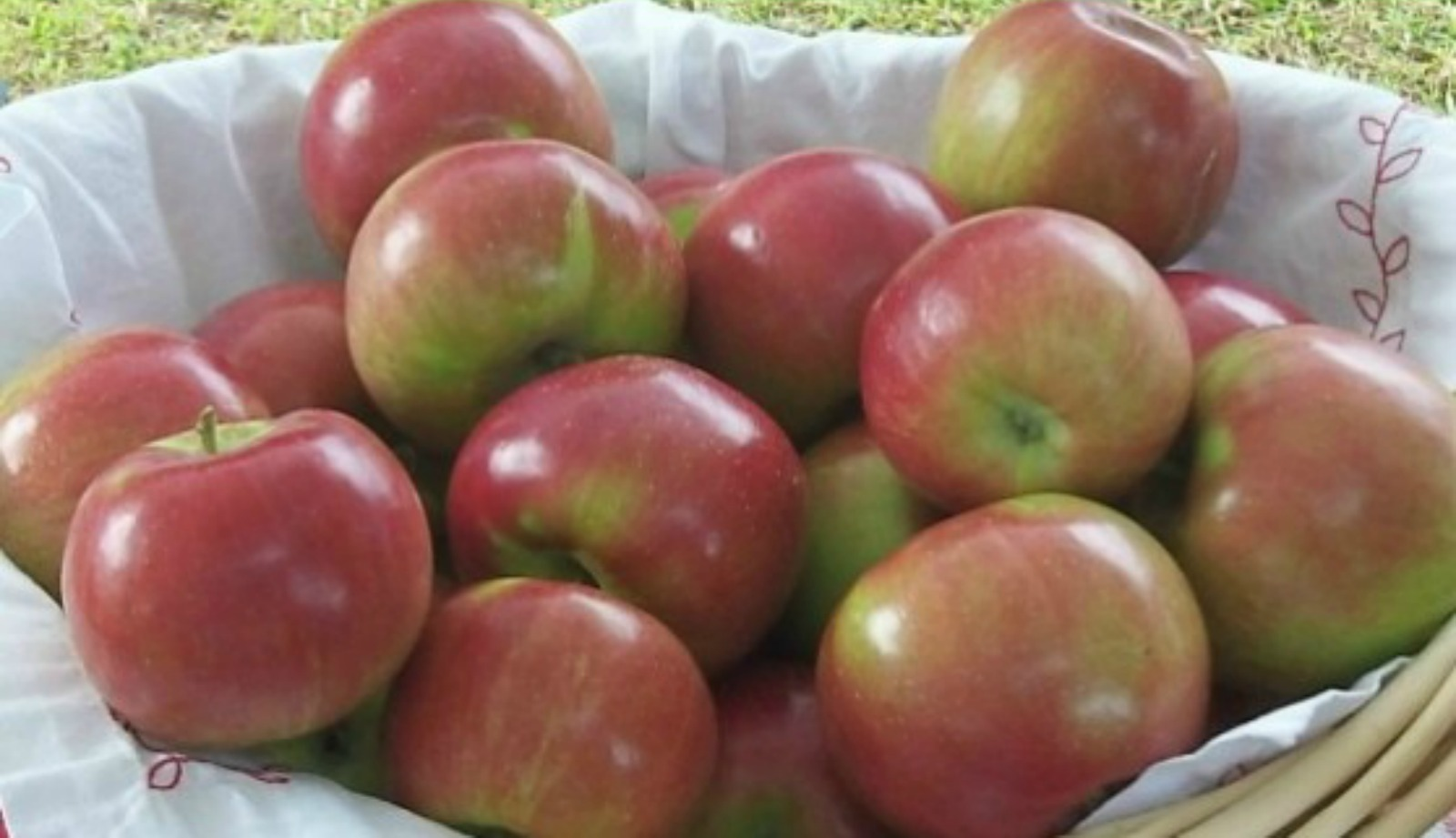 Healthy Apple Recipes You Need to Try!