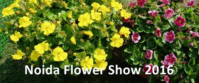 Noida Diary: 30th Noida Flower Show - Vasant Utsav 2016 in Noida