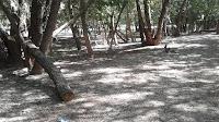 Мусор в роще на берегу реки Болда в Астраханской области