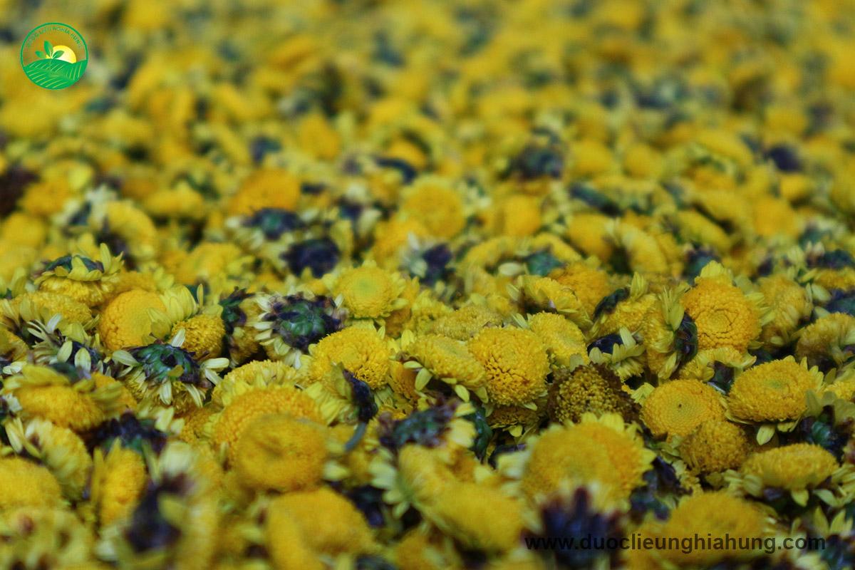 Dược liệu cúc hoa vàng vùng dược liệu