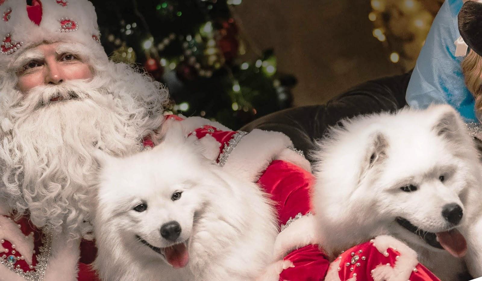 Как создать новогоднее настроение в семье: свежие идеи для подготовки к празднику