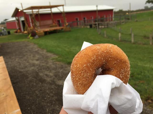Noshing on a warm apple cider donut at Richardson Adventure Farm.