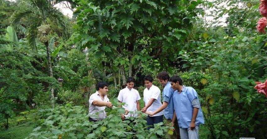 INS: Conoce el Jardín Botánico con más de 500 plantas medicinales, en el Instituto Nacional de Salud - www.ins.gob.pe