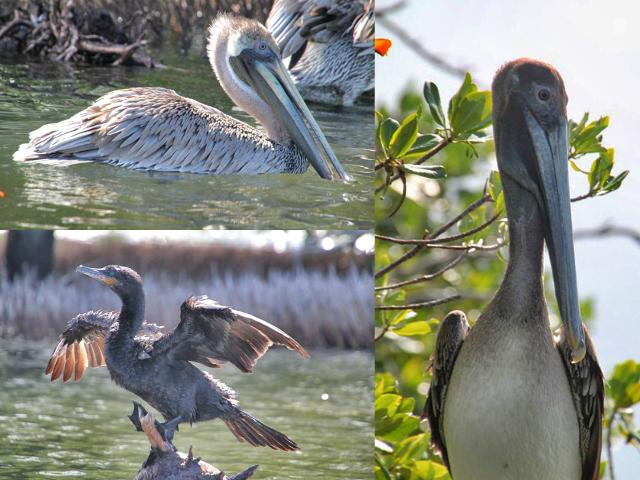Aves en el Parque Nacional de la Laguna de la Restinga