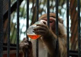 Топ 10 животных которые были арестованы