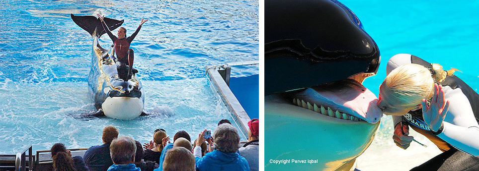 Incidents At Seaworld Parks: Revealing The Dark Side Of Marine Parks