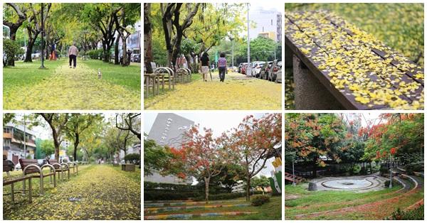 台中西區|梅川東路|雨後的阿勃勒在梅川園道鋪上黃金地毯|文化中心鳳凰花開
