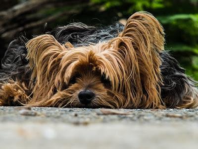multa-abandonar-perro