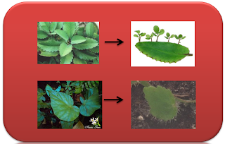 Life Processes of Plant
