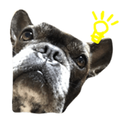 Frenchbulldognina