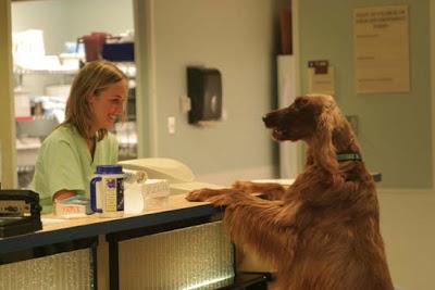 Εργαζόμενος ....σκύλος!