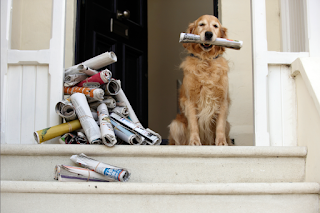 Dog delivering newspapers