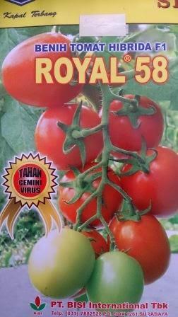Benih, tomat, tahan virus,kuning, keriting, unggul, dataran rendah, tinggi, petani, Royal 58, Royal 58 Murah, Tomat Royal 58, Cap Kapal Terbang
