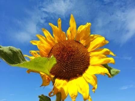 Giftige Und Ungiftige Pflanzen Im Garten Und Auf Dem Balkon