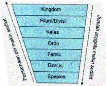 Urutan Tingkatan Takson dalam Klasifikasi