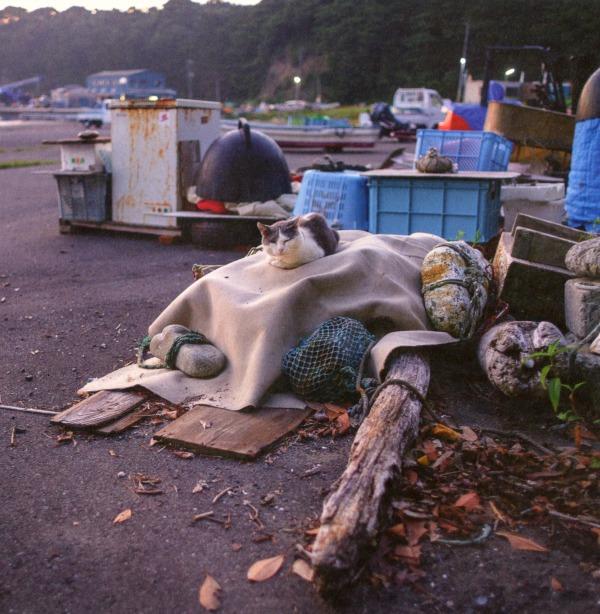 cat island near tokyo