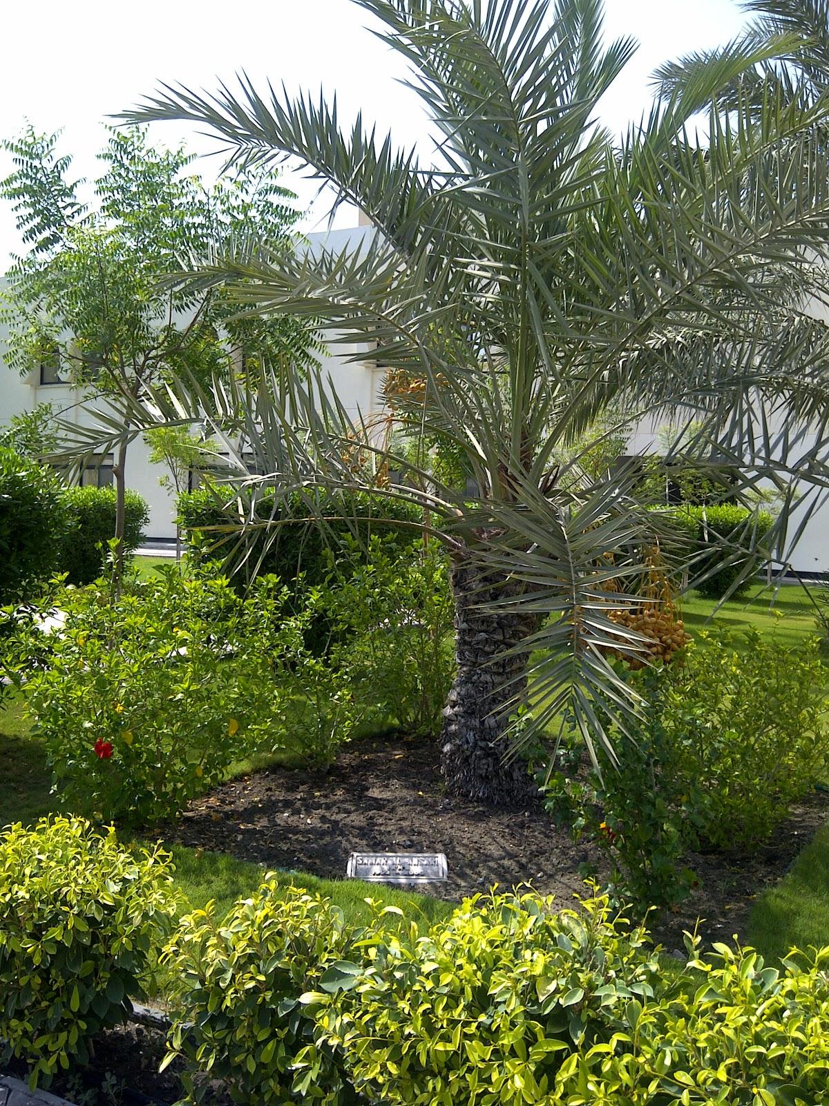 Samar Al Ansari Samar S Palm Tree At Ikns 20