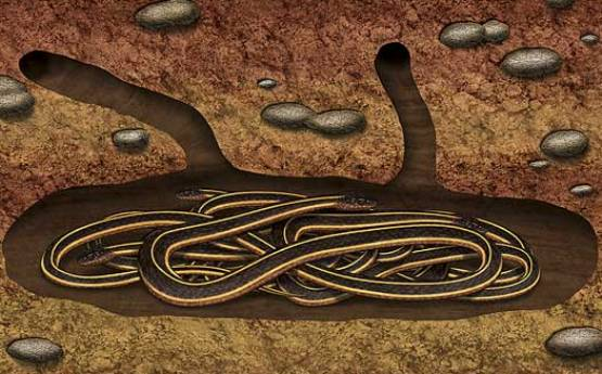 Snake hibernation den