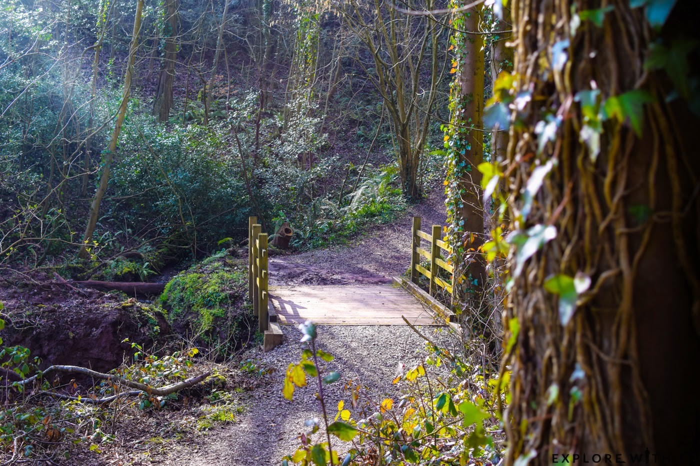 Celtic Manor Woodland Walk