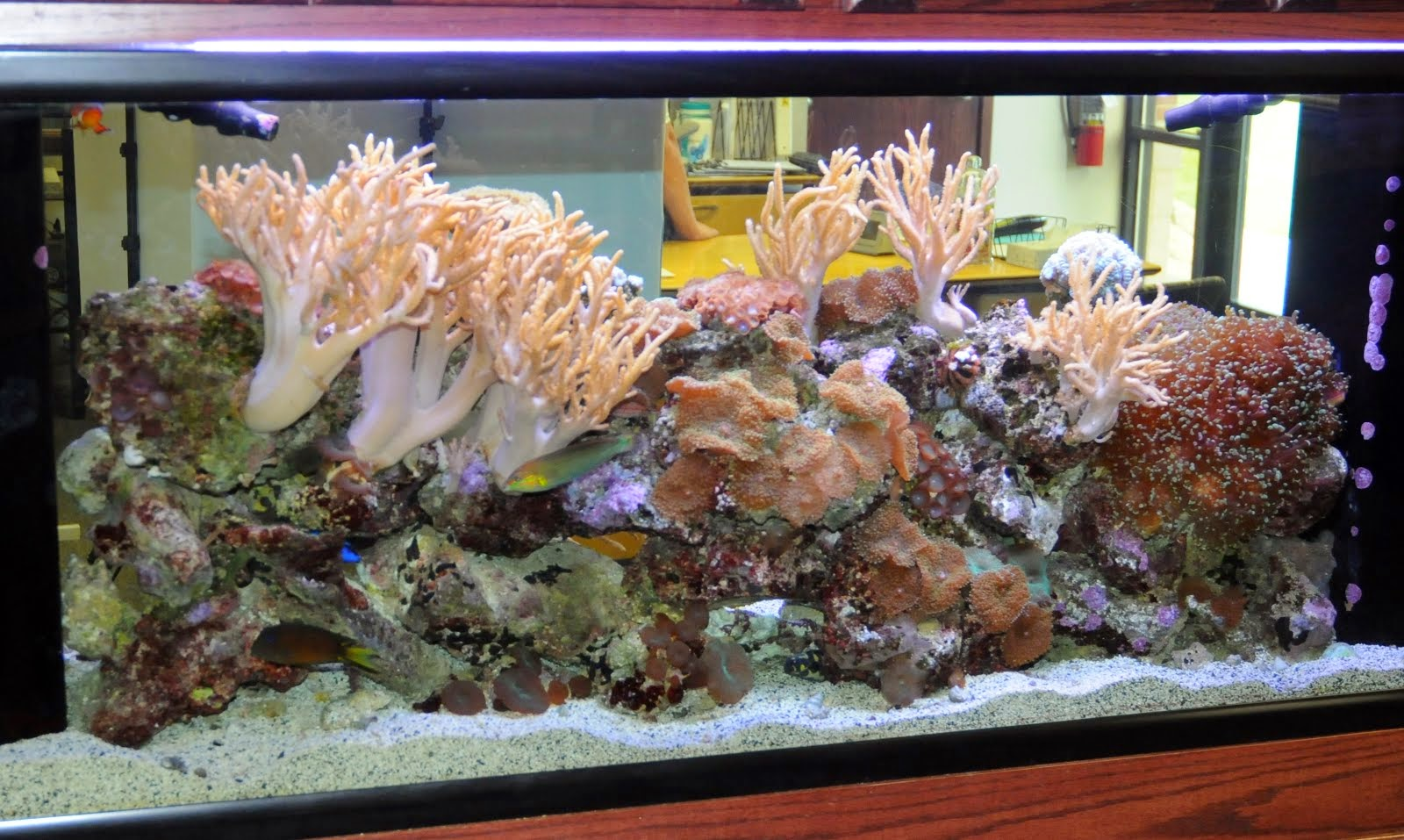 Reef Tectonics Why Do Fish Jump Out Of Our Aquariums