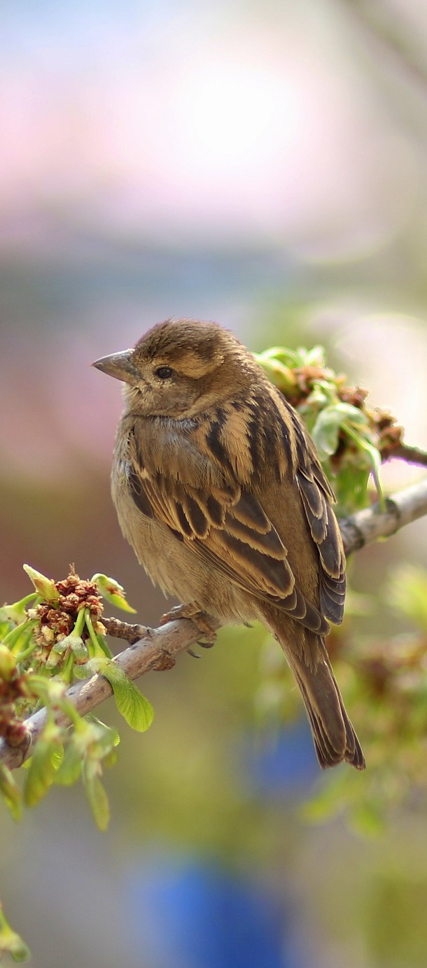 A sparrow on a tree branch.