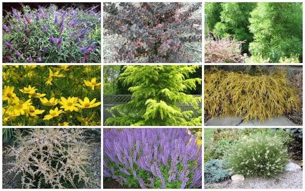 Deer Resistant Perennial Garden Plan – Deer Resistant Garden Plans