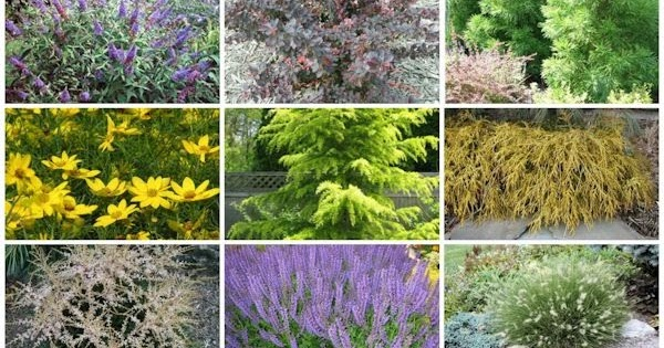 A GUIDE TO NORTHEASTERN GARDENING Deer Resistant Plants