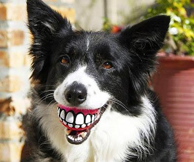 perro con sus dientes grandes