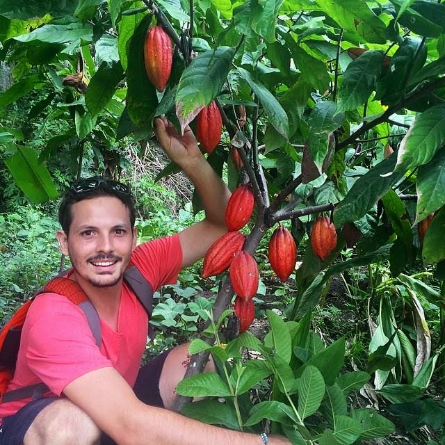 Daleys Fruit Tree Blog: Growing A Cocoa Tree In Australia