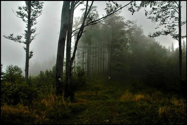 Mgła w górach zdjęcie