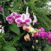 Fall Orchid Show continues today at Botanical Garden