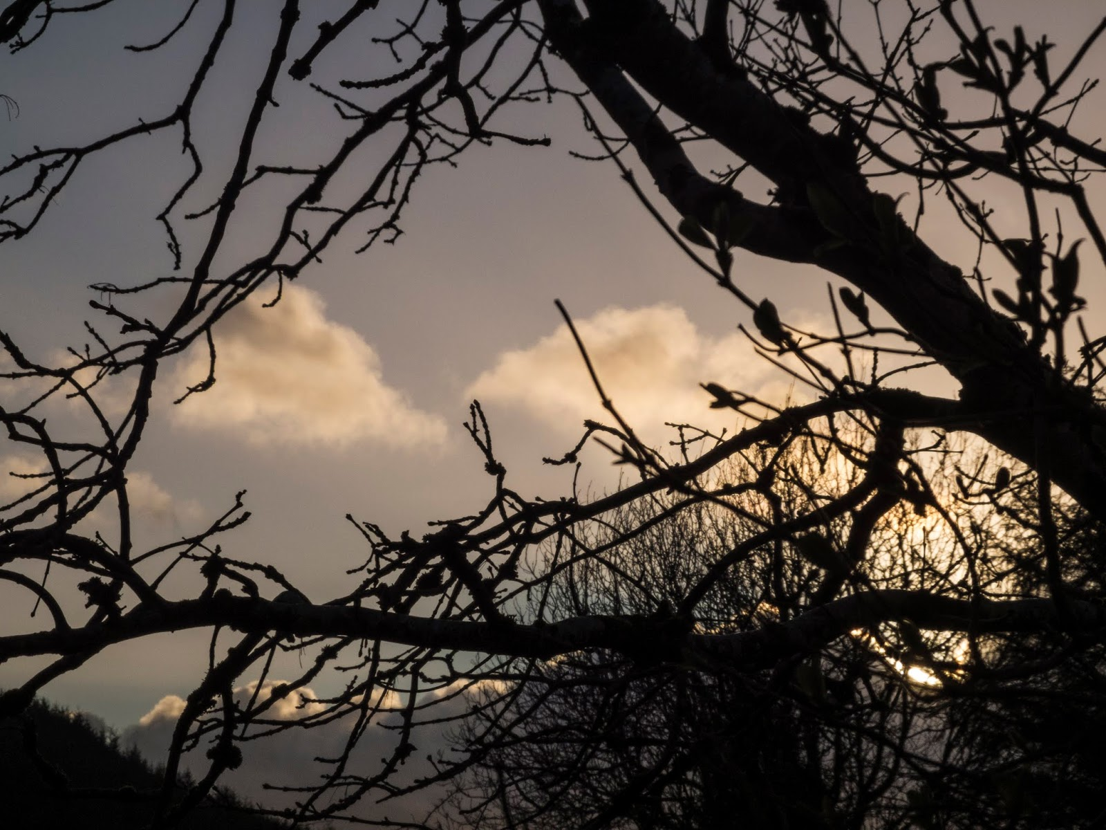 A silhouette of a tree trunk and branches with sunset clouds in the background.