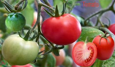 টমেটো, tomato, طماطم; 番茄; टमाटर; Помидор; Tomate; มะเขือเทศ; Domates; ٹماٹر