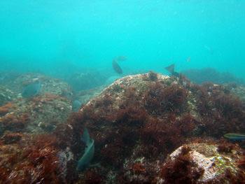 伊豆半島 体験ダイビング