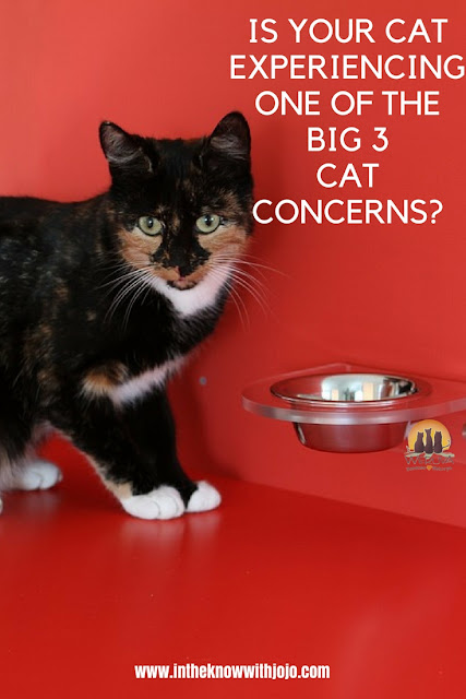 Most of the cats experiencing one of the three most common cat concerns: picky eating, weight gain, and urinary tract issues! Check out this article on how to prevent them.