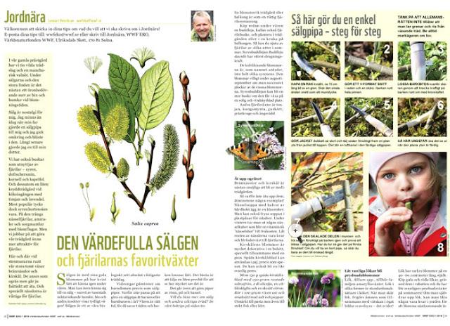Fjällripans blogg, WWF EKO