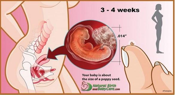 Nikah Gres 2 Minggu, Tapi Usia Kehamilan Udah 1 Bulan. Kok Bisa? Jangan Suudzon Dulu, Alasannya Yakni Itu Normal. Begini Penjelasannya